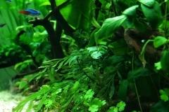 greenaquascaper 10