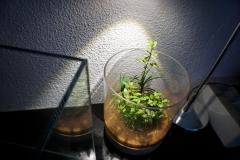 greenaquascaper 19