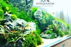 hypequarium 06