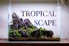 tropical_scape 27